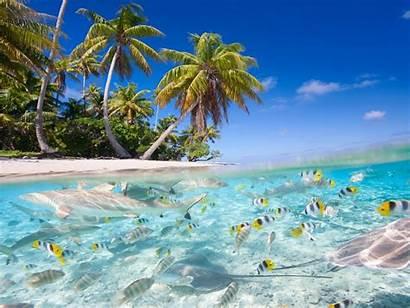 Tropical Scenery Beach Palm Sea Trees Fish