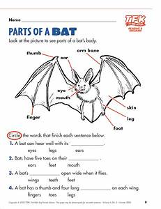 Parts Of A Bat Lesson Plan For Kindergarten