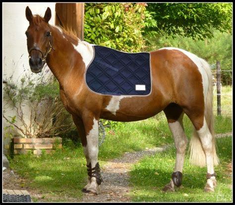 vos equipements pour vos chevaux pies