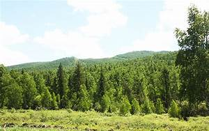 Biodiversity and Adaptation of Key Forest Ecosystems to ...