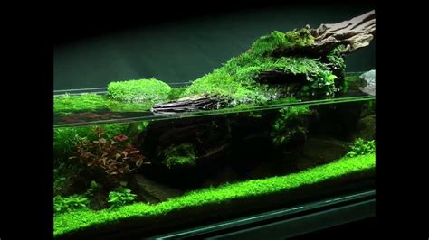 The Green Machine Aquascape by Simplicity Aquascape Preview Coming Soon
