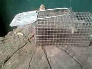 Comment Attraper Une Souris : comment attraper une souris sans la tuer avec un pi ge ~ Dailycaller-alerts.com Idées de Décoration