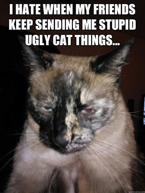 Ugly Cat Meme - ugly cat memes quickmeme