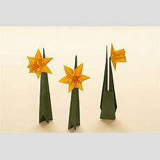 Daffodil (ted Norminton)  Also In Origamiland It Is Spring… Flickr