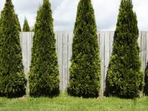 Backyard Privacy Landscaping Ideas with Trees