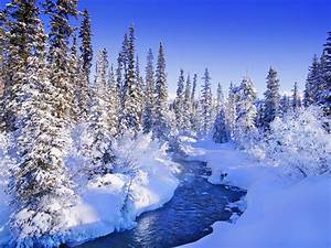 Beautiful Winter - Wallpaper #20118