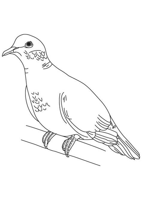 Dove Coloring Page Dove Coloring Page Coloring Home