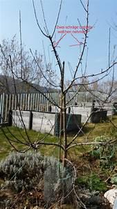 Apfelbaum Schneiden Wann : junger apfelbaum schneiden mein sch ner garten forum ~ A.2002-acura-tl-radio.info Haus und Dekorationen