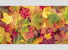 Herbst, ich liebe dich FM1Today