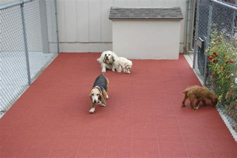 Kennel Flooring for Dogs   Phobi Home Designs