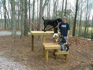 Goats Love To Jump On Ramps
