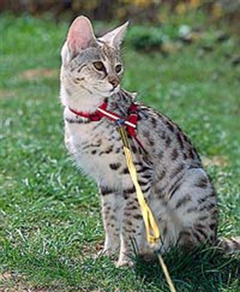 Katze Leine Garten