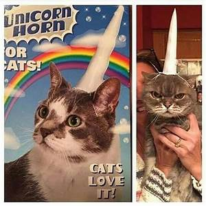 Cats La : best 25 unicorn cat ideas on pinterest pusheen unicorn pusheen cat and pusheen gif ~ Orissabook.com Haus und Dekorationen