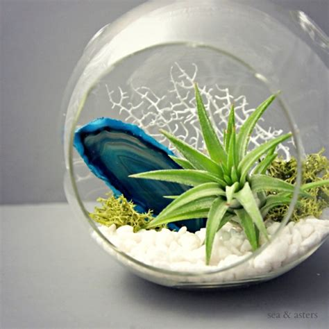 Moderne Pflanzgefäße Für Luftpflanzen Von Experten Entworfen