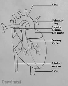 Easy Heart Diagram