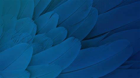 wallpaper feathers stock hd creative graphics