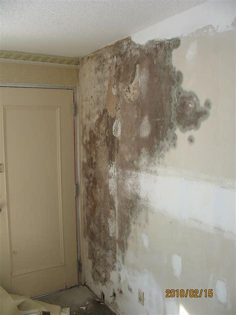 mold  wallpaper wallpapersafari