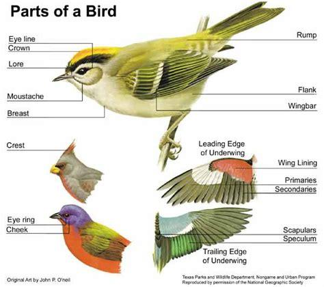 anatomy  animals english subject area