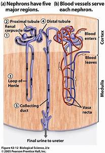 7th Period  7th Grade Science  Study Guide  2012