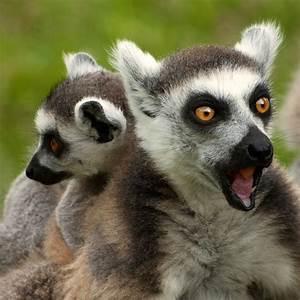 25 Hilariously Funny Photos of Shocked Animals - Best ...