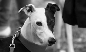 Schwarz Weiß Bilder Tiere : hund in schwarz wei foto bild natur tiere bilder bilder auf fotocommunity ~ Markanthonyermac.com Haus und Dekorationen