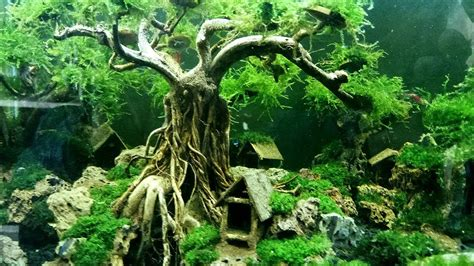 how to make an aquascape how to make underwater bonsai tree for aquascape