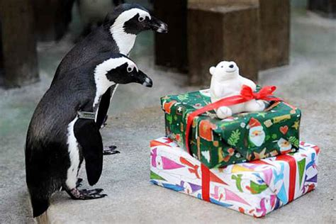 your morning adorable merry christmas to zoo animals l a unleashed los angeles times