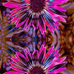 abstract - flowers Flower Power Three Photograph by Ann Powell