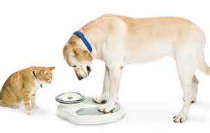 how to make my cat gain weight paw watchers scale ez vet pet education and news