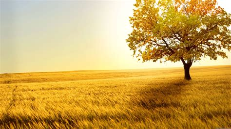 Widescreen Background by Hd Wallpaper For Desktop Background 183 Wallpapertag