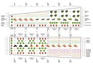 Plan Jardin Potager Bio by Le Plan De Culture La Mont 233 E Bonachoux