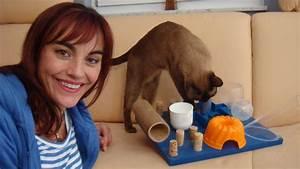Malzpaste Für Katzen : ein fummelbrett f r katzen ~ Orissabook.com Haus und Dekorationen