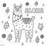 Alpaca Lama Colorante 孩子 Textiles 搞� sketch template