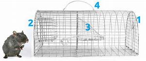 Piege A Rat Castorama : quelques liens utiles ~ Voncanada.com Idées de Décoration