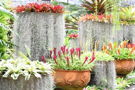 bromeliads australia nursery bromeliads