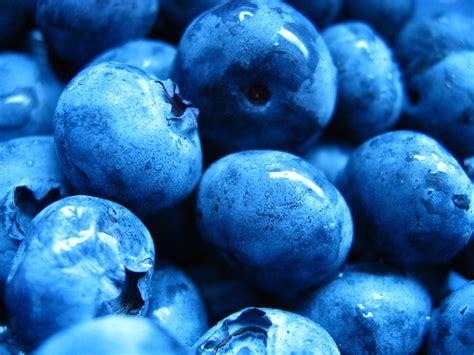 blue blueberry colors photo 34683009 fanpop