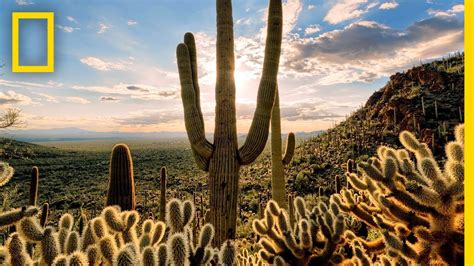 Deserts 101   National Geographic - YouTube
