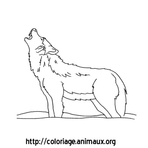 loup hurle coloriage loup hurle sur coloriage animaux org