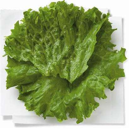 Sandwich Lettuce Grilled Chicken Leaf Nutrition Ingredients