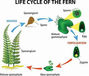 Best Photosynthesis Diagram Illustrations  Royalty