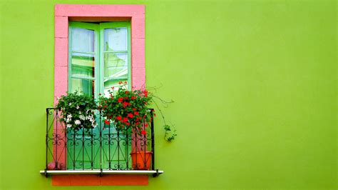 green wall window wallpapers hd wallpapers id