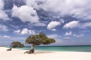 Eagle Beach Aruba Caribbean