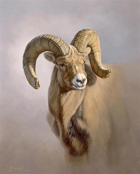 ram portrait paul krapfjpg  drawing animals