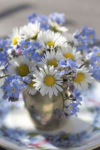 Best 25+ Forget me not ideas on Pinterest Forget me not