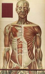 Historical Anatomies On The Web  Bougl U00e9  Julien Home
