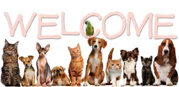 animal clinic of welcome noah s animal hospitals indiana