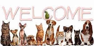 Vet Clinic in Aurora & Southeast Denver, CO   Animal Hospital