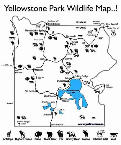 Yellowstone National Park Worksheet Coloring Printable Activities