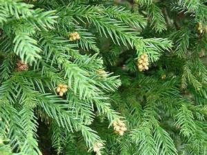 10 Evergreen Trees Every Gardener Should Know