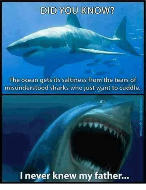 Ocean Memes - 25 best memes about want to cuddle want to cuddle memes